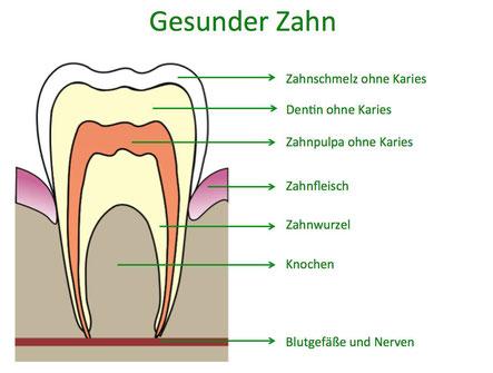 Gesunder Zahn ohne Karies