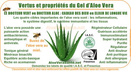 AloeVeraSante | Miel & le gel d'Aloe Vera en usage interne : anti-inflammatoire, antiseptique, hémostatique, antalgique, apaisant, immunisant, antibiotique, antiallergique etc