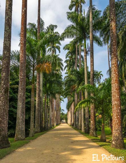 Aléia Barbosa Rodrigues, Botanischer Garten, Rio de Janeiro
