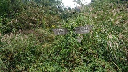 踏み跡が怪しいハコネダケの下山口(中央から奥へ見落としそうな看板)