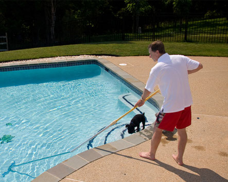 Why Do You Need Pool Service and Maintenance in Las Vegas ...