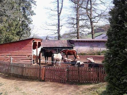 Gnadenhof Meinerzhagen - ein etwas anderer Ponyhof
