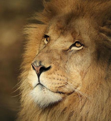 le lion est mort ce soir paroles cycle 2