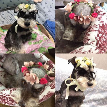 犬連れ ワークショップ 花冠 チョーカー