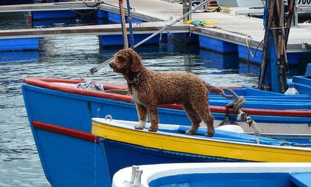 Urlaub mit Hund in Dorum