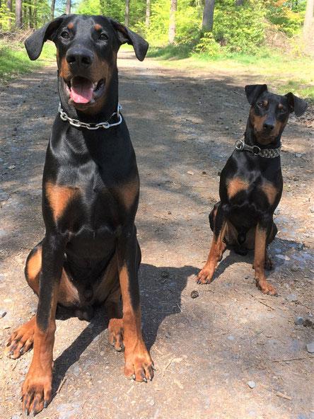 """Tejo (Dobermannrüde, 9 Monate) und """"großer Bruder"""" von Jakob, sind der ganze Stolz ihrer Familie :-)"""