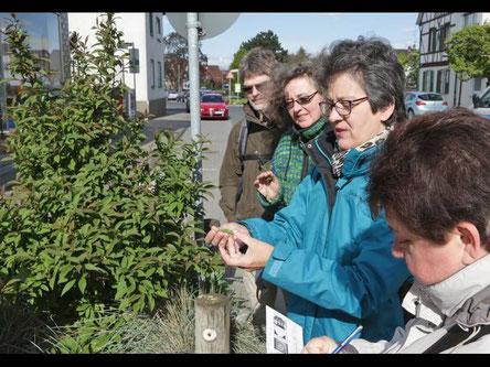 Kräuterwanderung mit dem Sozialen Netz Trebur am 20.04.2017