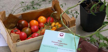 Anschauungs- und Verkostungsmaterial Tomatenworkshop Barnim Panorama