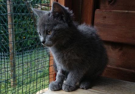 Guido noch bei der Katzenbetreuung.