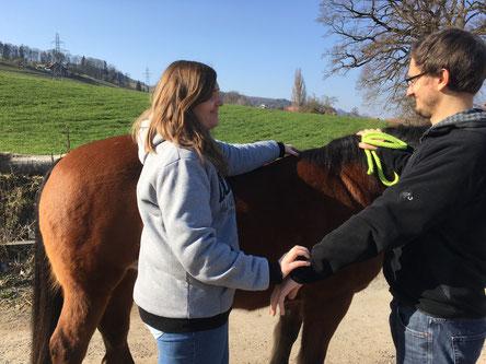 Kinesiologischer Muskeltest beim Pferd