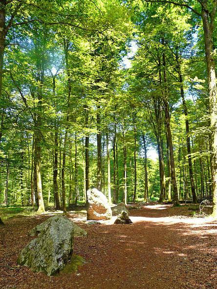 Le cordon des druides en forêt de Fougères © crtb-donatienne Guilaudeau