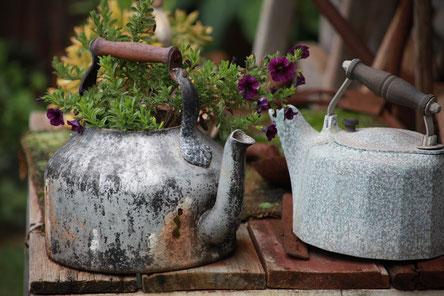 Deux théières en zinc, abîmées, contenant de la terre et des fleurs.