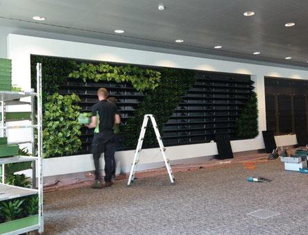 jardín vertical en proceso de montar y colocar plantas.  42 metros cuadrados de jardín vertical montado en un día.