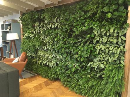 Jardín vertical interior plantado con helechos, marantas plateadas y epipremnum