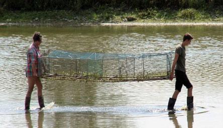 Familie Stöhr beim Umsetzen einer Uferreuse nach verändertem Wasserstand.