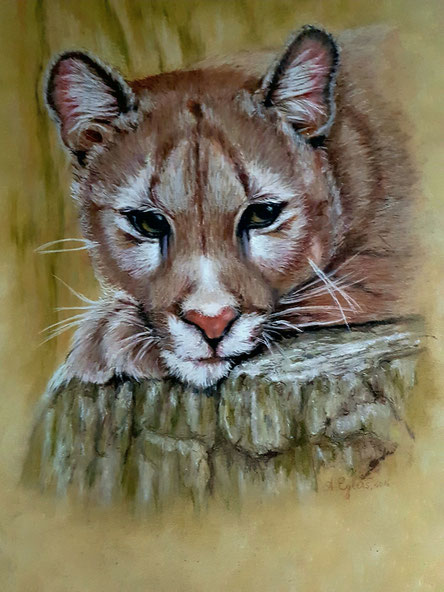Puma, Pastellkreide 50x70  2016