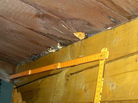 Holzpilze an der Unterseite eines Balkons.