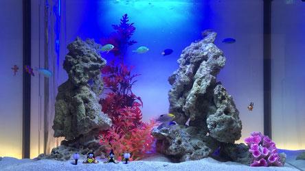 千葉県の市川市にあるブルーブルーが管理している海水魚のレンタル水槽