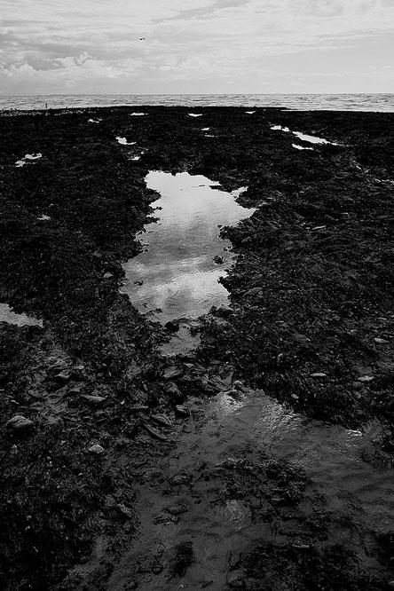 Mathieu Guillochon photographe, France, Normandie, Manche Saint-pair-sur-Mer, voyage, mer, rivage, littoral, estran, marée basse, noir et blanc, mouette, fin d'après midi, flaque, reflet, récif.