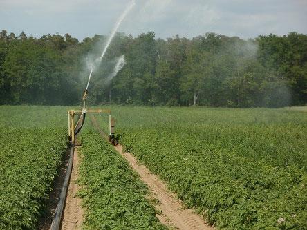 Production agricole et irrigation des sols avec les conseils d'Agralis