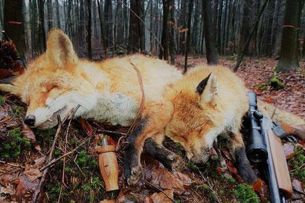 Fuchlocker von Raubzeug Jagdlocker für die erfolgreiche Lockjagd