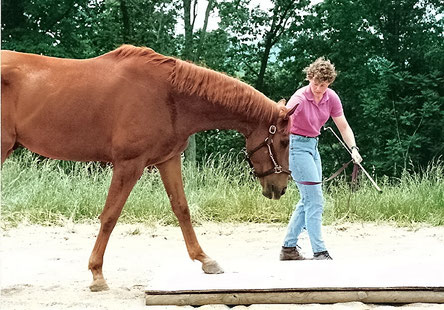 Leading horse onto a platform