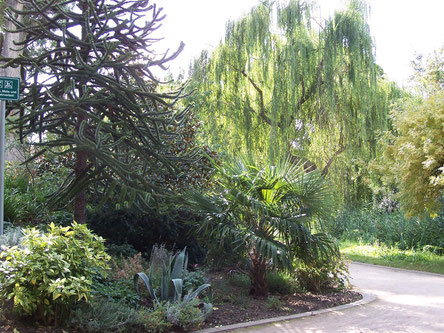 Der Stadtpark in Deidesheim wartet mit vielen mediterranen Pflanzen auf. Foto: Pfalz-Touristik