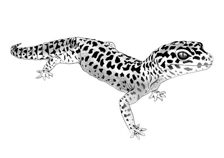 Gecko illustration zeichnung leopardgecko