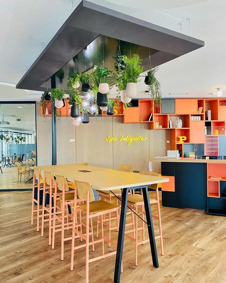 location et entretien de plantes pour bureaux