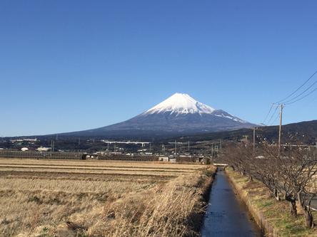 富士山と田んぼ