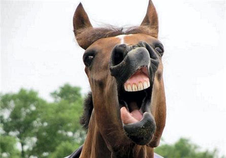 Même Henry, mon cheval en rit...
