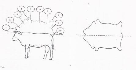 Correspondance des Parties sur l'Animal et sur la Peau.