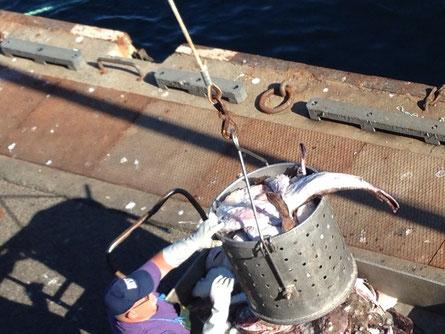 Tonnen an Fisch werden ausgeladen und direkt am Hafen versteigert