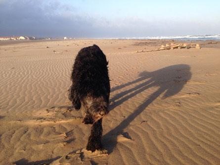 The Beach-Monster-Shadow