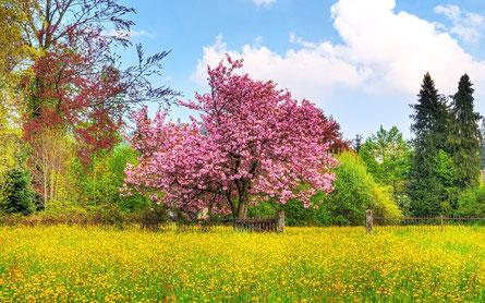Genau SOOOO ....ist Frühling :-))))
