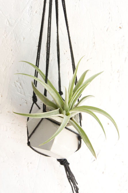 DIY Mini Macramé plant hanger with PASiNGA dodecahedron Air Plant holder