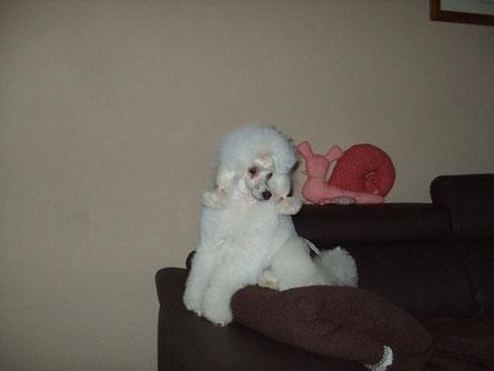 Molly hat die Haare ab Januar 2013