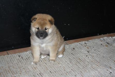 Alvin - 4 Wochen alt