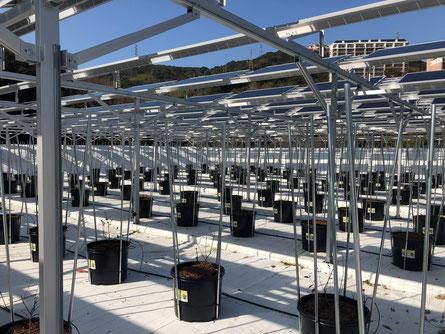 アグリツリー|ハウステンボス ソーラーシェアリング