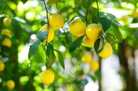 【精製蜂蜜】レモン果肉入りはちみつ,はちみつオンライン通販ビーハニー