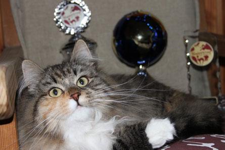 Momo (Shanti the Kindly Nature) / mit Dank an Simone (www.kindly-nature.de) für diese tolle Katze