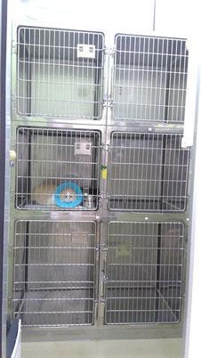 犬・猫のペットホテル