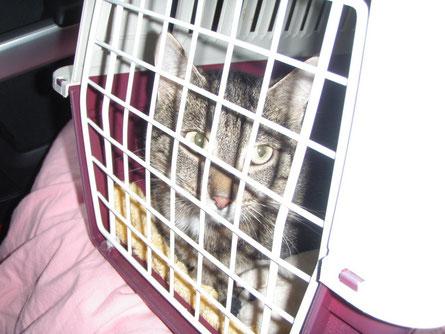 Holly war ganz lieb während der über 4 Stunden Fahrt und hat nicht miaut ... :o)