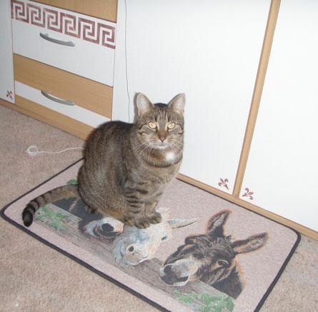 Holly im Arbeitszimmer ... auf der Esel-Matte von Nicky :o)