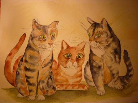 3 Katzen   --  Nov. 2014