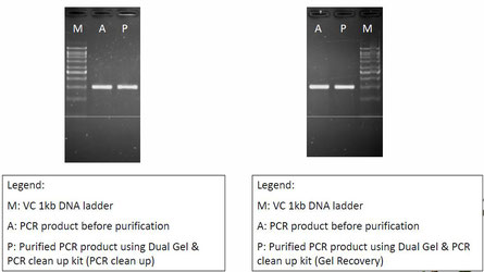 Gel and PCR-product purification Kit, Isolierung DNA