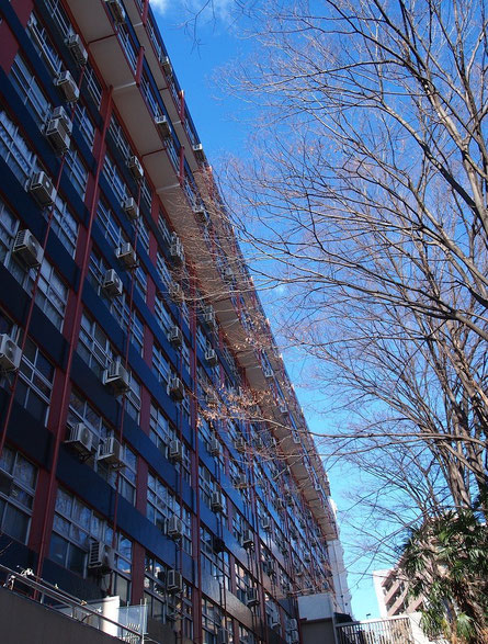 1月22日(2016) 冬木立と集合住宅:小金井街道が国分寺崖線にかかる坂の近くで