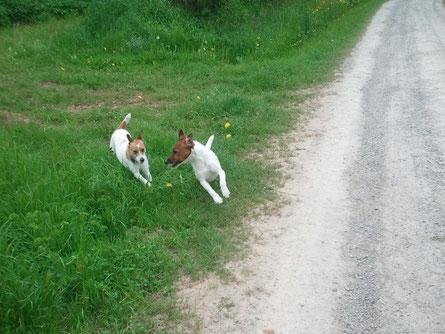 Cora und Drago vom Schindwald