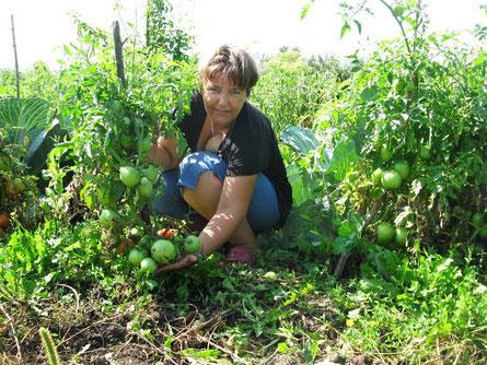Помидорки даже в это холодное лето дали урожай.