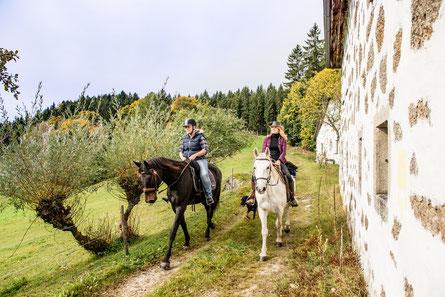 Wanderreiten, Österreich, Heimelsteiner